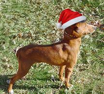 Gus - Santa