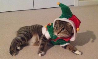 Beth - Bunny Cat