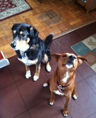 Lynns 2 dogs