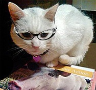 White cat with glasses