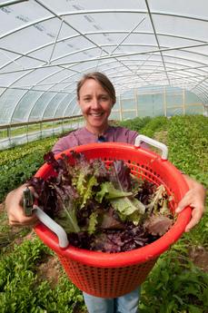 Farmer holding lettuce