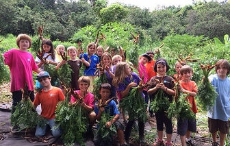 Kona Pacific students harvest carrots