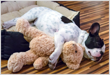 A puppy sleeping soundly with a stuffed animal.
