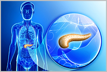 A diagram and close-up of a pancreas.
