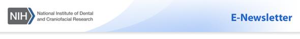 E-Newsletter Header