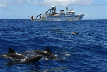 HICEAS Sette and whales
