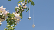 Branch with flower and device hanging from limb