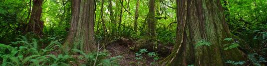 foresthealth
