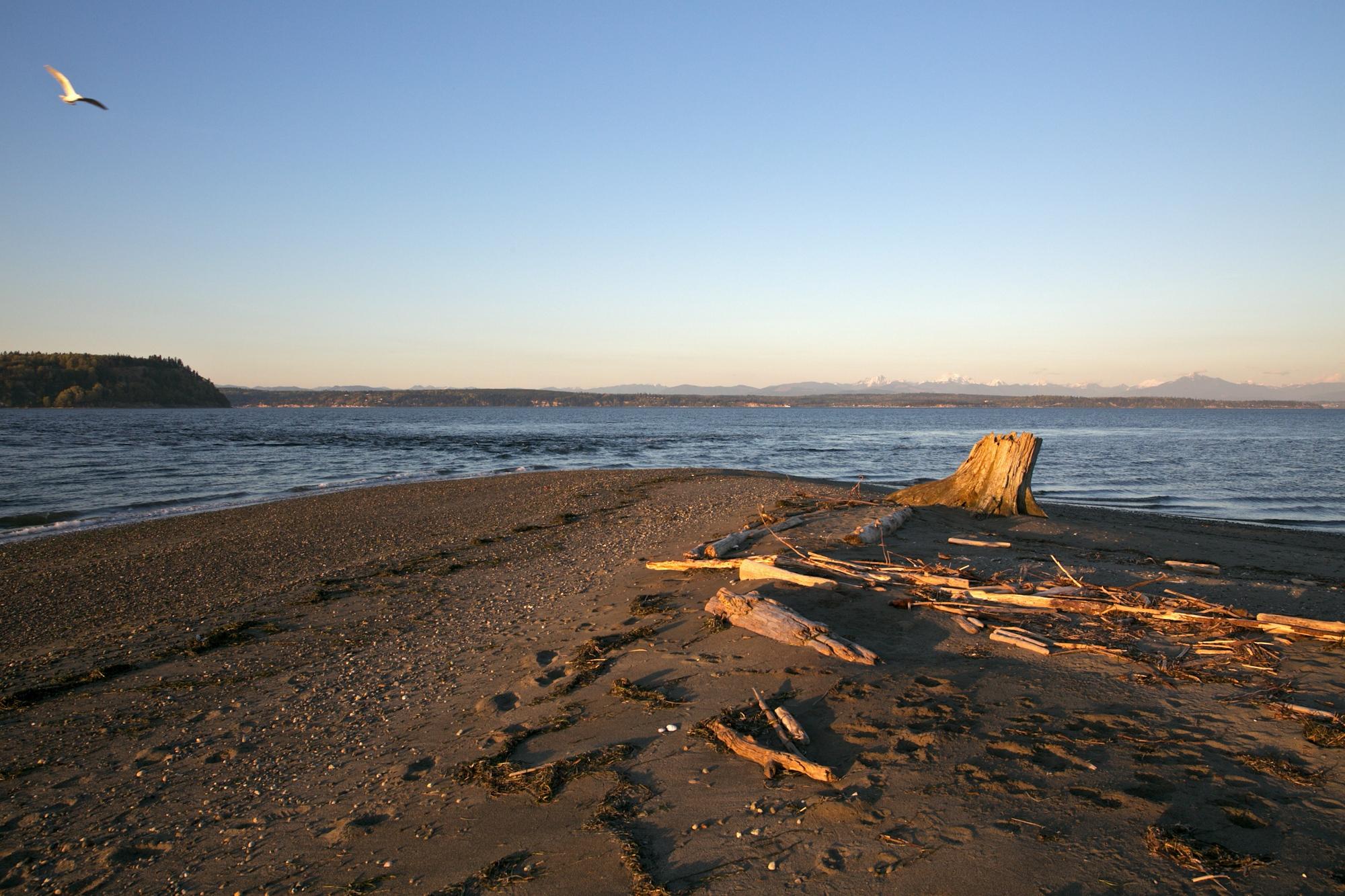 Shore with Bird