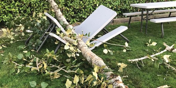 Tree fallen at Idylwood Park