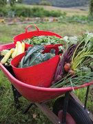 Garden harvest by Jentri Colello