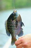 2015 Fishing Forecast
