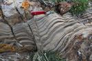 Stromatolites example
