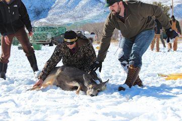 Baggs mule deer trap