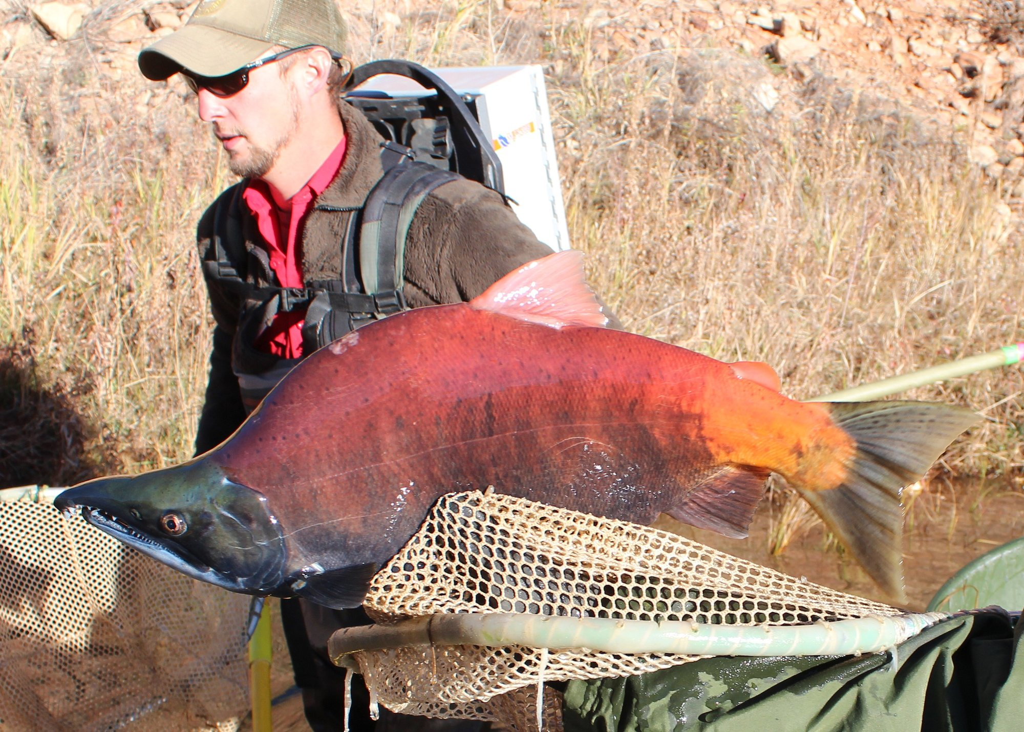 Snagging fish illegal in wy anglers watch for area for Game and fish wy