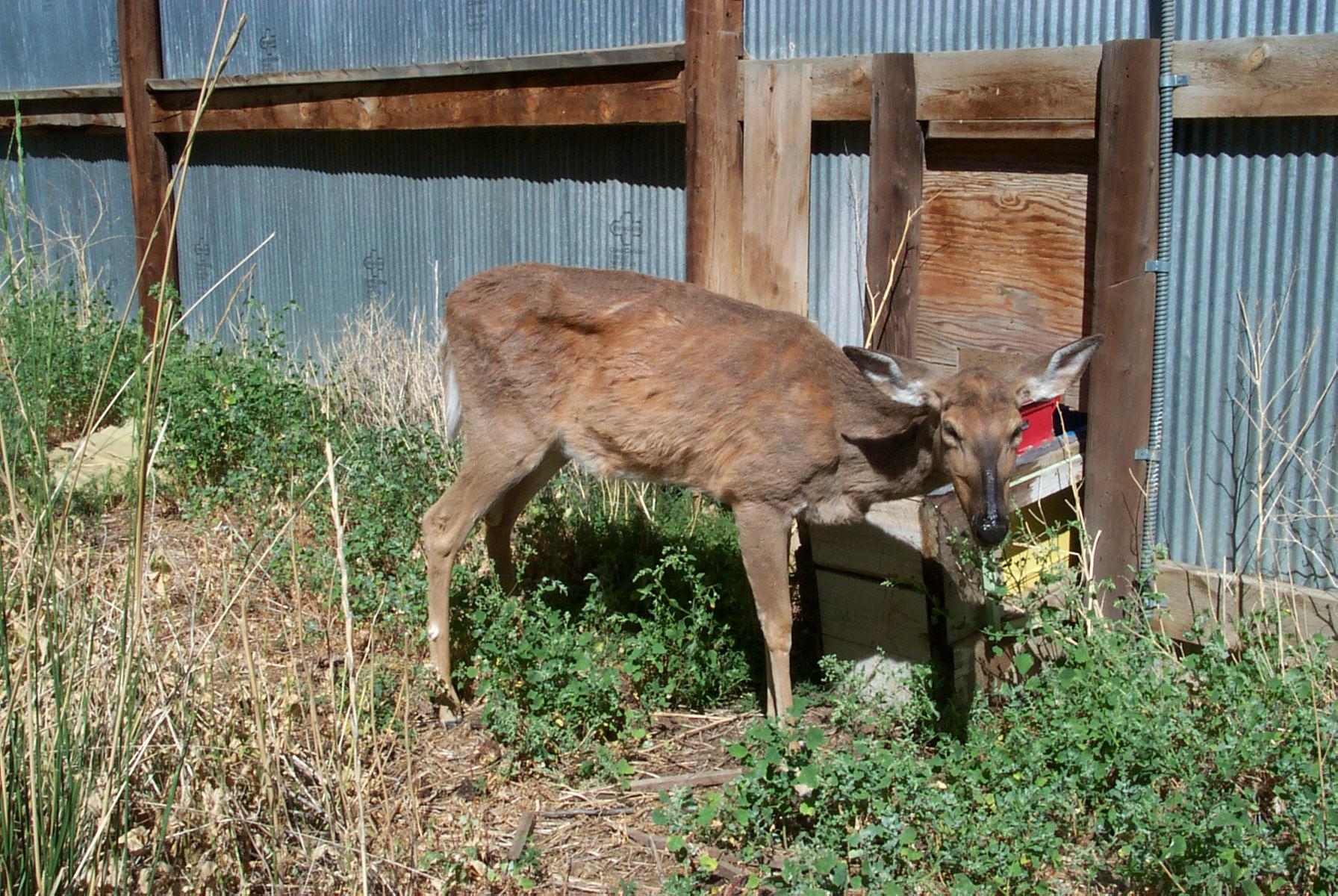 deer hunting thesis statement Free research that covers vegetarians vs meat eaters vegetarians vs meat eaters thesis statement vegetarians vs meateaters deer hunting laws.