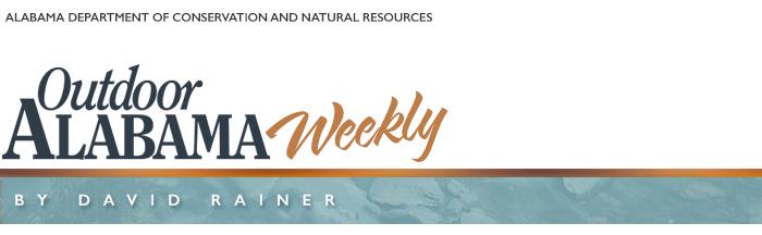 Weekly Column Header