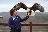 Eagle awareness