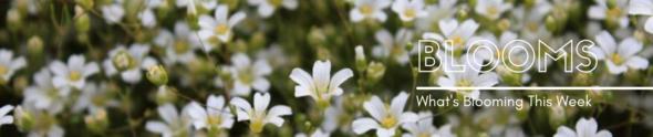 DSP Blooms Gov. Del.