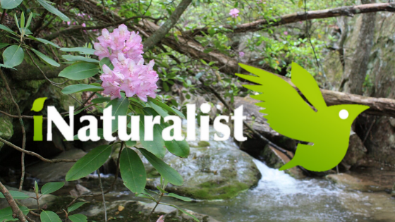 DSP iNaturalist Logo