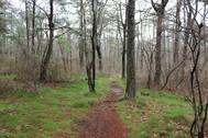 DSP Silver Trail