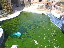 Mosquito-Pool