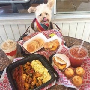 Dog-Restaurant (A)