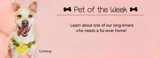 Featured Pet