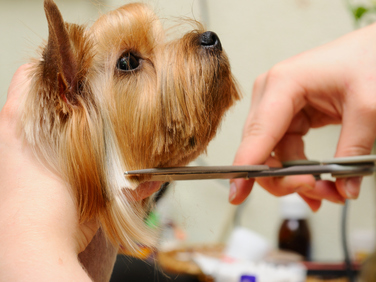 Pet Groomers - Cut