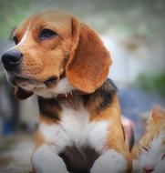 Animal Care & Control