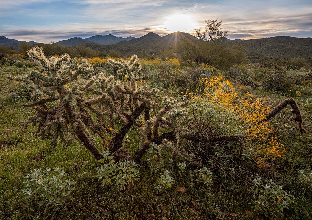 maricopa trails