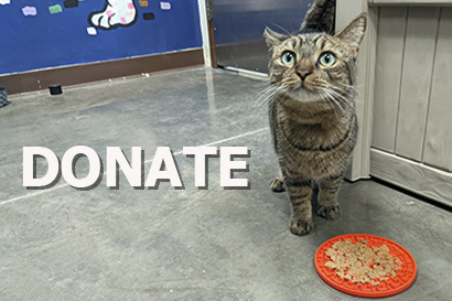 Help us save pets by donating today