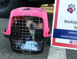 Cat Fix Adopt Save