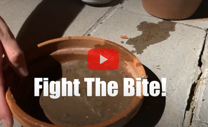Fight The Bite: What Maricopa County is doing to stop the spread of the West Nile Virus