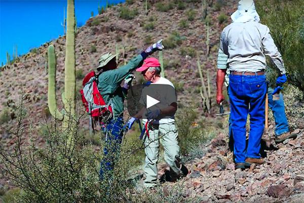 Sonoran Desert Weed Wackers