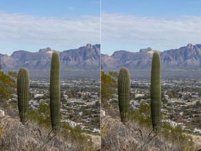 Cacti by Sentinel Peak