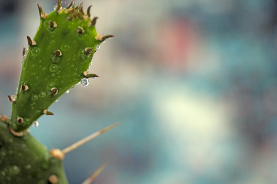 TW-cactus-rain
