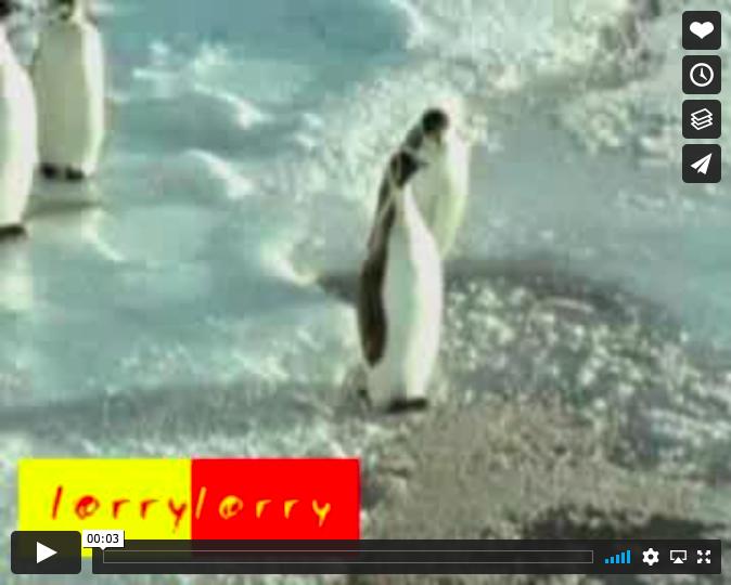 Penguin Vimeo