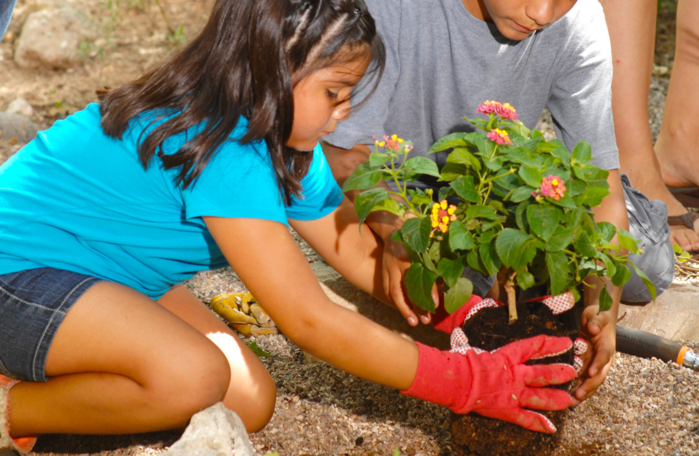 TW-spring-planting