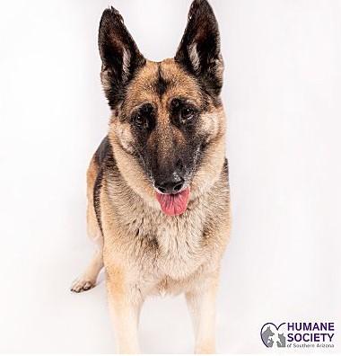 Osa the Dog