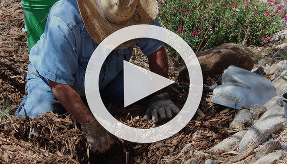 TW planting video