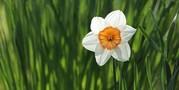 HERA workshop flower
