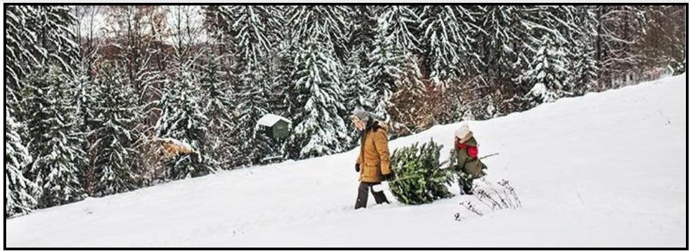 Tree cutting permits