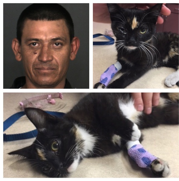 Frightened kitten thrown in freezer in California, tossed off balcony; man arrested