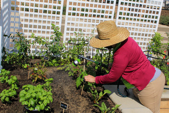 Woman wearing a hat and watering a garden of fruits and vegetables