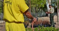 LA County Jail Inmate watering plants with a garden house