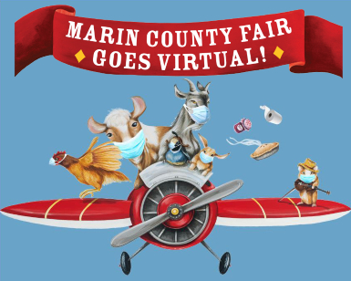 Artwork depicts farm animals flying in an antique plane with the words Marin County Fair Goes Virtual