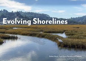 Evolving Shorelines