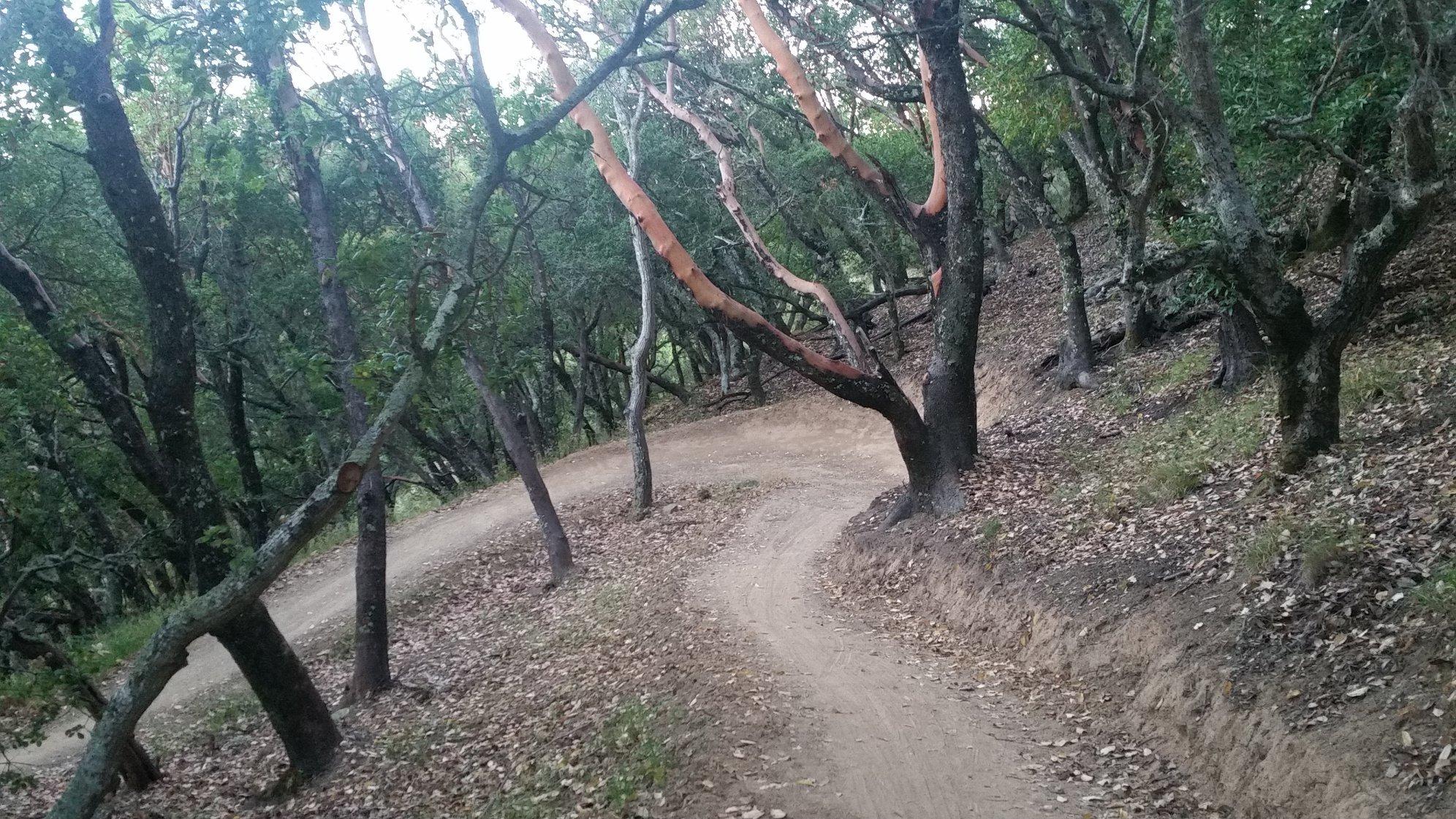 Ponti Ridge