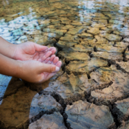 Dry cracked earth is covered by a few inches of water. A person cups their hands to scoop up a bit of water.